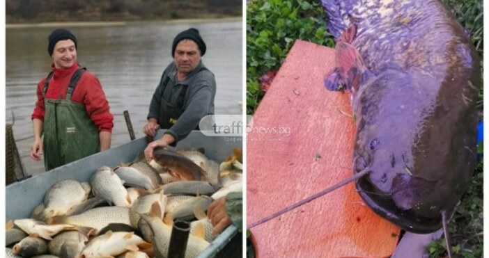 Сом с масата на малка акула беше уловен в язовир