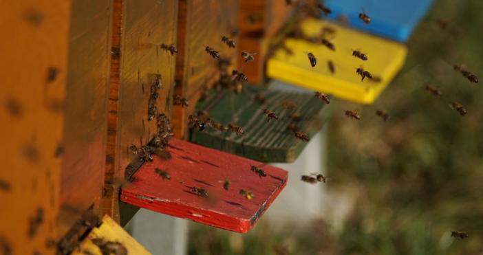 Снимка: pixabay75-80% от храната на трапезата ни зависи от пчелите.