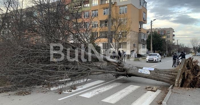 Силният вятър, който от снощи брули Враца, вече създава проблеми