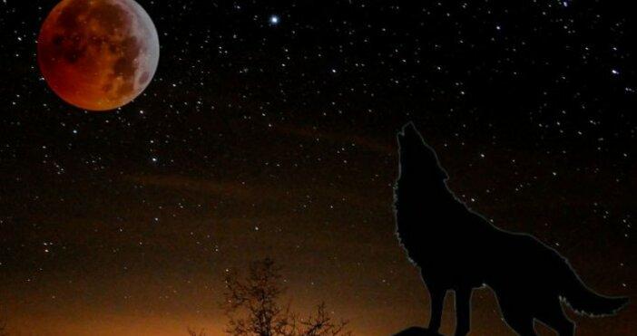 """""""Вълча"""" Луна наблюдаваметази вечер. От векове януарското пълнолуние носи името"""
