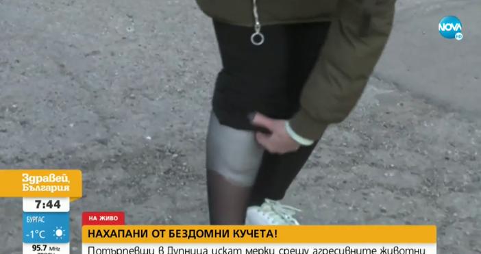 Кадри: Нова ТвКучета нахапаха две жени в Дупница. Едната е