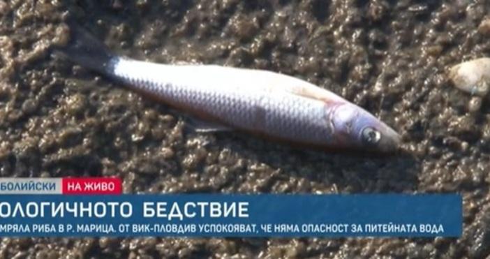 Продължава екологичното бедствие по река Марица между Пазарджик и Пловдив.