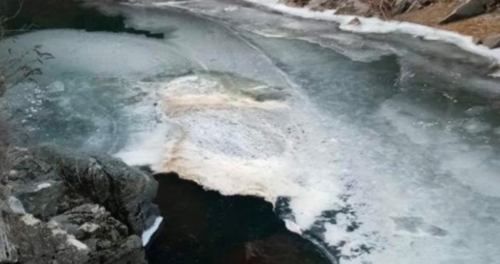 КадърТВ САТ КОМСигнал до асеновградски медии замъртва рибаврека Чая, подаде