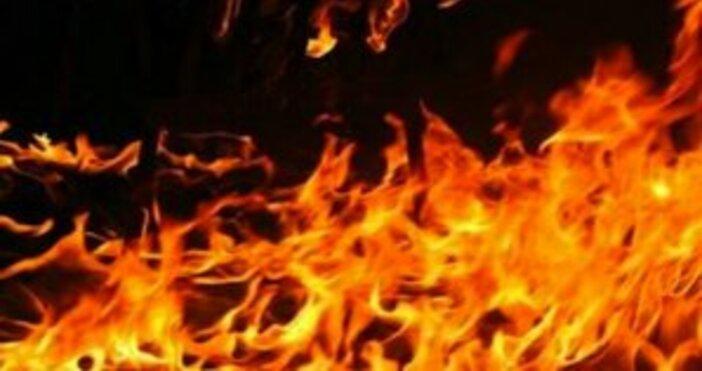 Снимка Булфото11 елитни коне са загинали при пожар край врачанското