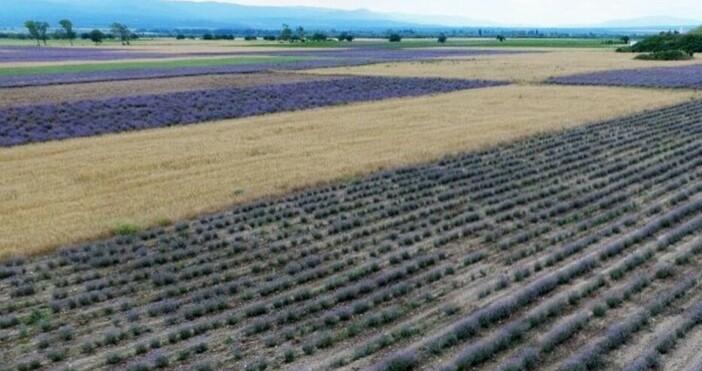 Земеделски производители бяха сигнализирани, че няма да могат да продадат