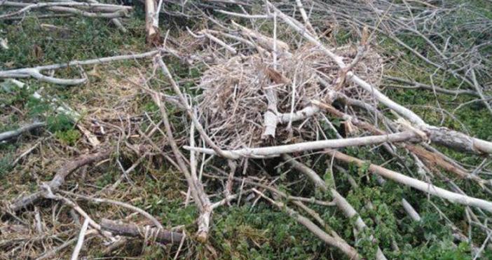 Снимка:Българскодружество за защита на птицитеУнищожена е единствената колония на големи
