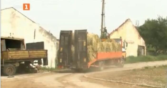 БНТкадър: БНТОгнище на Ку-треска е регистрирано в област Габрово, съобщи