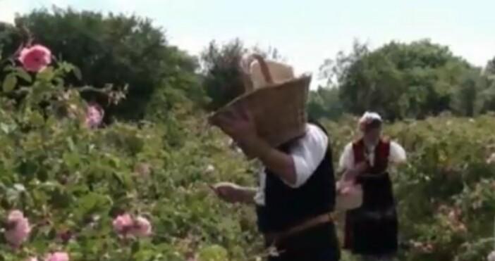БНТкадър: БНТПразникът на розата в Карлово, който по традиция се