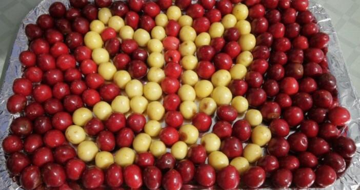 Снимка: БулфотоВъпреки противоепидемиологичните мерки срещу КОВИД-19 традиционният Празник на черешата