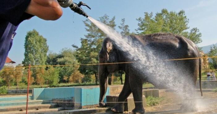 Снимка БулфотоИндийската слоница Артайда, която е символ на Софийския зоопарк,