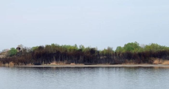 """Булфото (архив)Пожар избухна край Атанасовското езеро, близо до кв. """"Ветрен"""""""