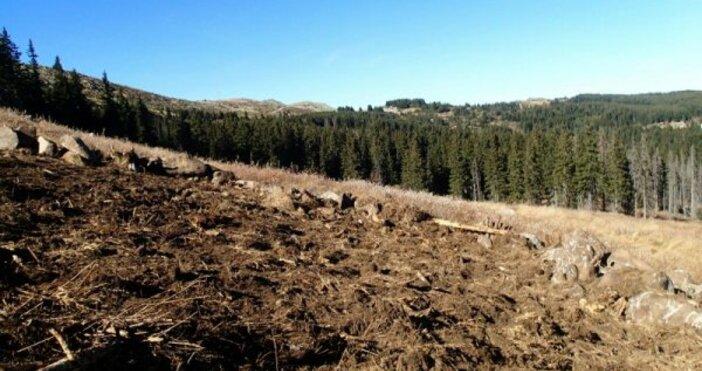 снимка: БулфотоЗапочнахме засаждането на Новата гора на София през 2017