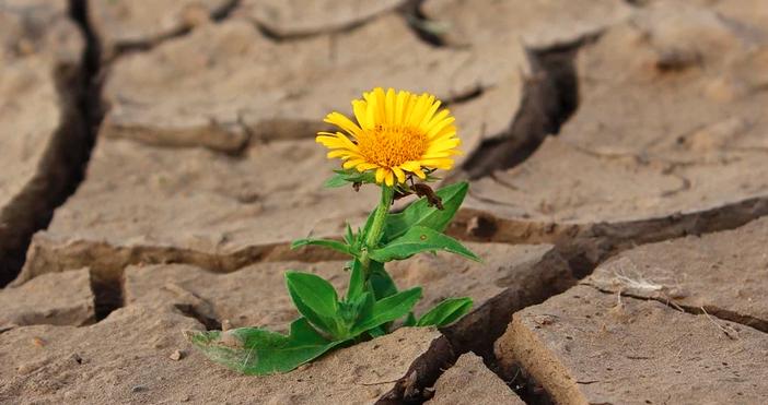 снимкаpixabayДнес ще е слънчево със слаб, предимно източен вятър. Горещо