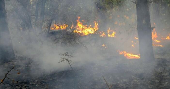 снимка БулфотоГолям пожар гори крайСандански. Огнената стихия се разпростира между