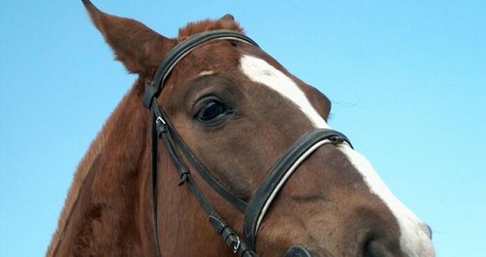 """Снимка Булфото, архивДавещ се кон в язовир """"Искър"""" беше спасен"""