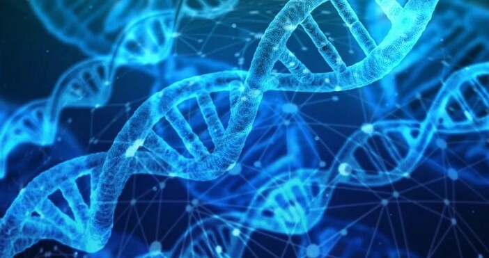 nauka.offnews.bgфото:pixabay.comНов анализ на древни геноми предполага, че различни клони на