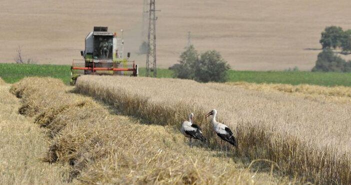 кадър БулфотоГолеми загуби очакват зърнопроизводителите това лято след незапомнената суша