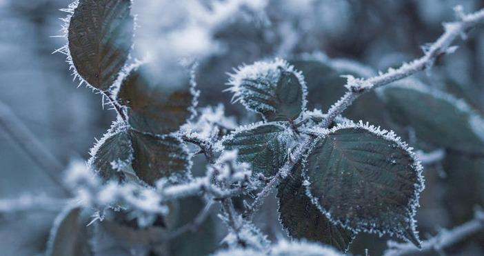 Снимка PexelsВече имаме температурен рекорд в България. Рекордните за тази