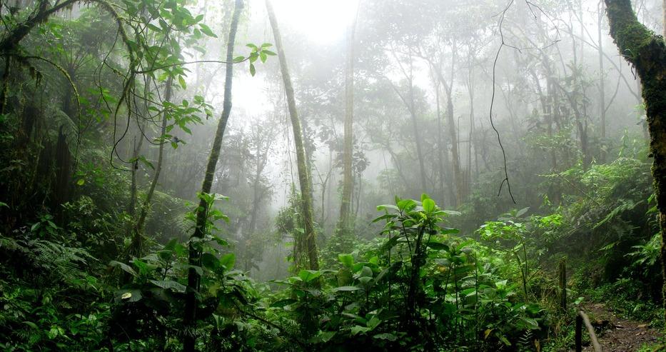 Ваксинират масово в Амазонската джунгла
