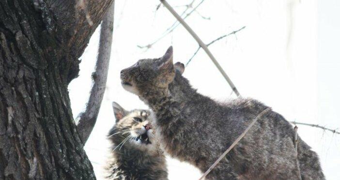 Снимка Булфото, архивКолко бездомни котки има в София? Това, оказва