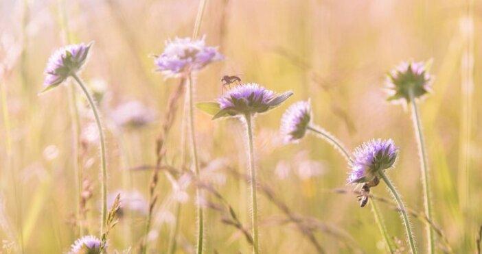 Снимка: PixabayВ началото на новата седмица ще бъде слънчево.Сутрин ще