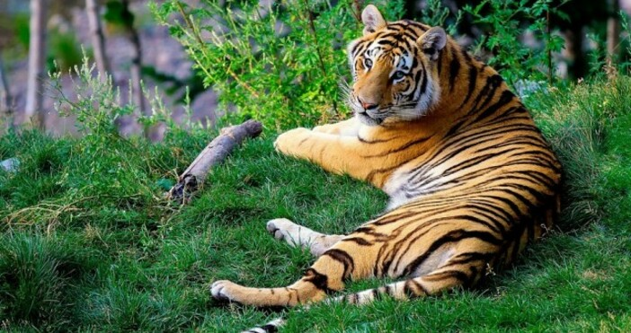 снимка:Pixabay.comОт Световния фонд за дивата природа (WWF) публикуваха данни през