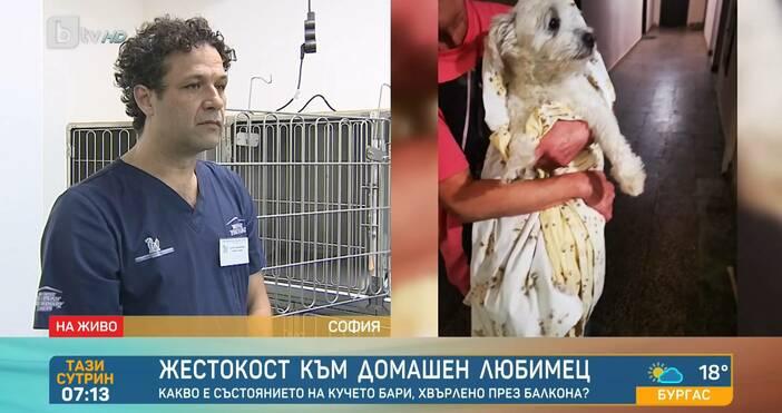 Редактор: ВиолетаНиколаеваe-mail:Прокуратурата започва досъдебно производство срещу столичанина, хвърлил кучето си