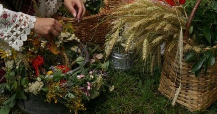 снимка: БулфотоРождество на Йоан Кръстител (Еньовден)24 Юни /Имен ден:Биляна, Ивет,