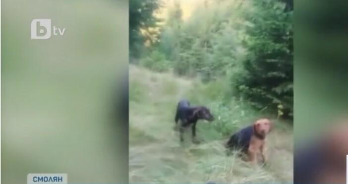 кадър и видео БТВДесетки кучета са били изоставени край пътя