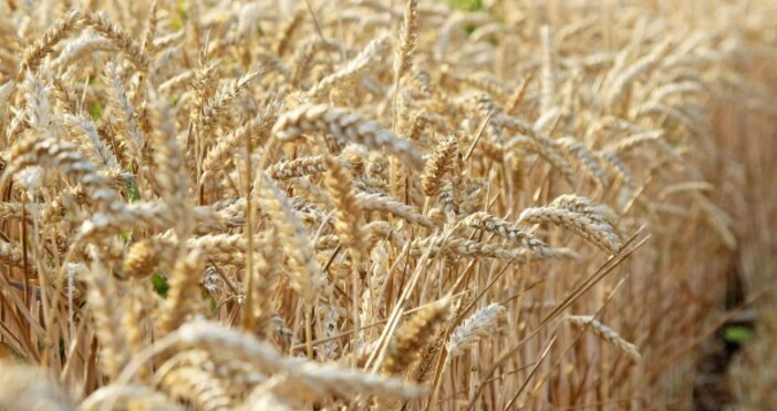 снимка: БулфотоТова заяви земеделският министър Иван Крупко, цитиран от РИА