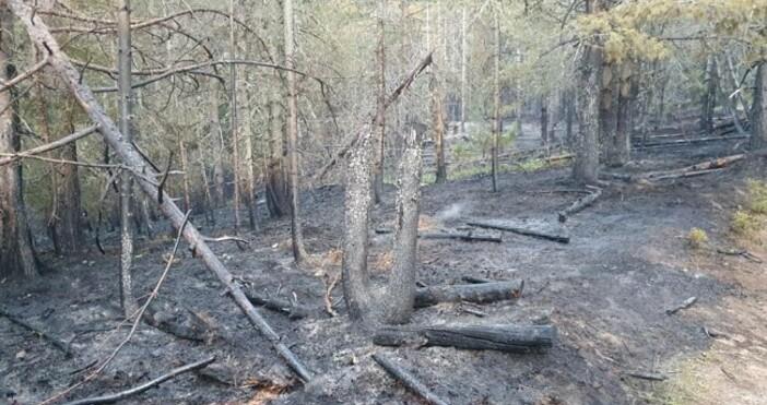 Снимка: Община СърницаПожарът в Сърница е овладян.Общински служители, доброволци и