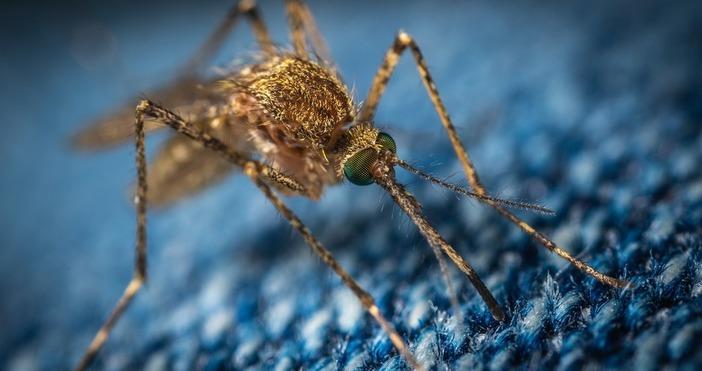 Снимка PixabayОпасен вид насекоми нахлува в Европа.Опасен вид комари, които